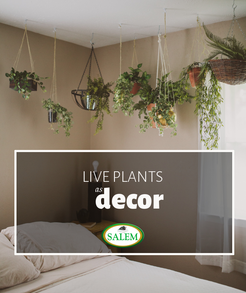 Design Highlight: Bedrooms Using Live Plants As Decor