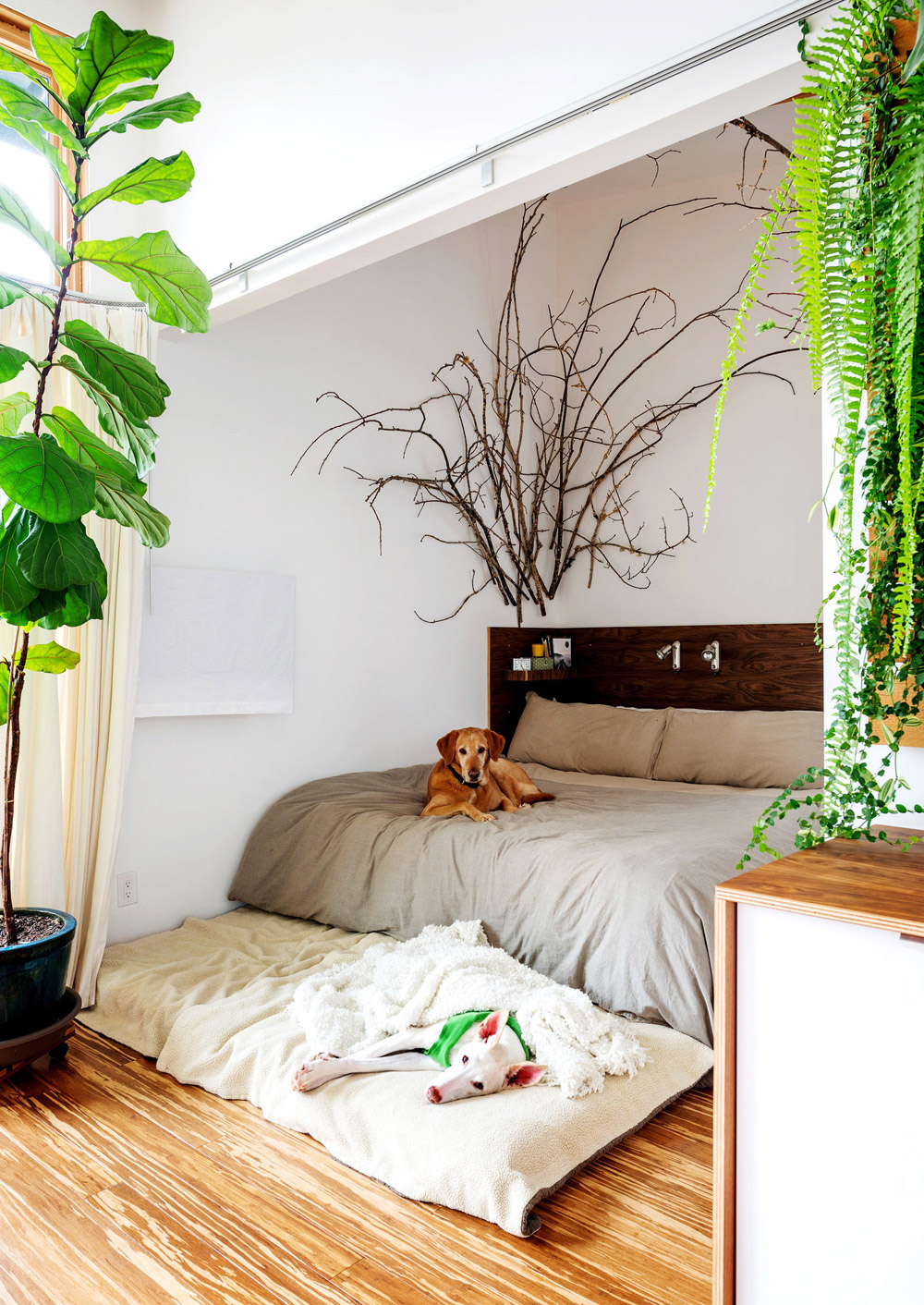Design Highlight Bedrooms Using Live Plants As Decor