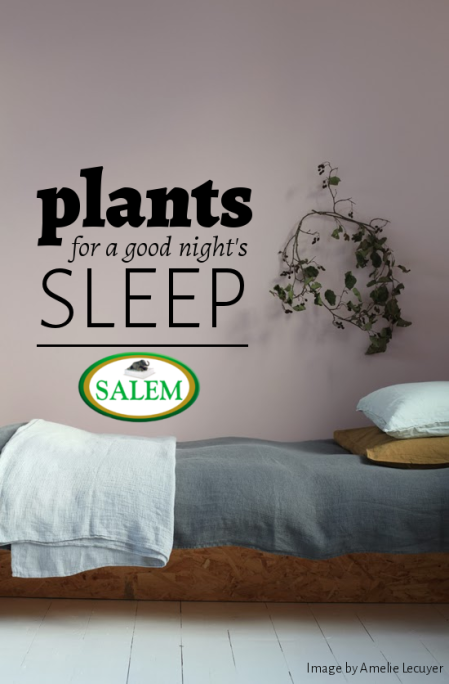 plants for sleep banner