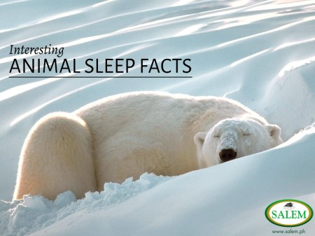animal sleep facts banner