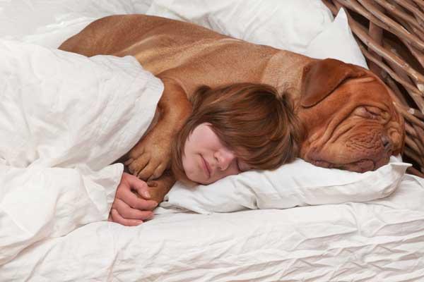 girl-big-dog-bed-cuddle