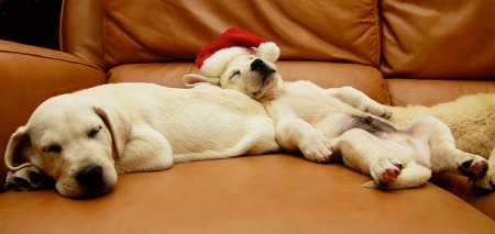 holiday sleep puppies