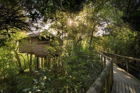 Tsala treetop lodge 3